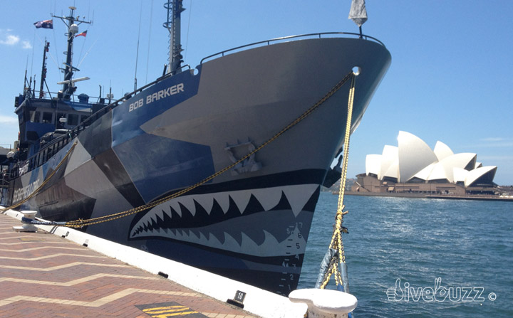 Sea Shepherd – Love them or loathe them?