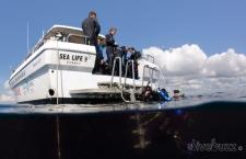 Boat dive Sydney aboard Pro Dive's Sealife V