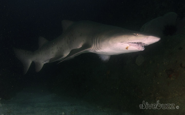 Project AWARE's Big Shark Shout Out