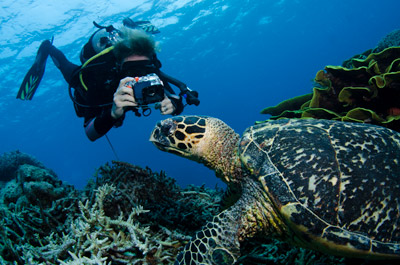 J9 photographing a turtle