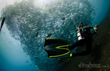 Diving in Bali – Tulamben and beyond