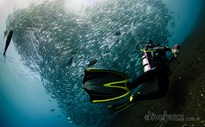 Diving in Bali &#8211; Tulamben and beyond
