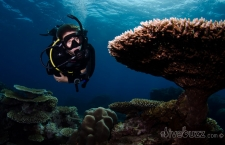 Proper Weighting For SCUBA Diving