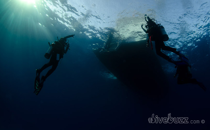 Best buddies – Finding your perfect dive buddy