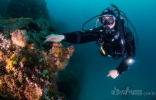 Tips for diving in a current