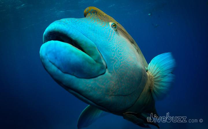 Jewel in the crown of Australian Marine Parks