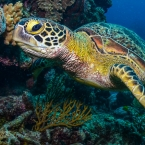 Ten facts about sea turtles